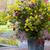 jardins · Holanda · flor · sapatos · sapato · objetos - foto stock © phbcz