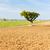 campo · árvore · planalto · França · paisagem · europa - foto stock © phbcz