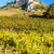 ruínas · castelo · vinha · outono · baixar · Áustria - foto stock © phbcz