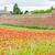 vestingwerk · stad · Italië · bloem · gebouw · muur - stockfoto © phbcz