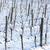 winter vineyard southern moravia czech republic stock photo © phbcz