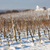 winter vineyard near hnanice southern moravia czech republic stock photo © phbcz