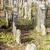jewish cemetery batelov czech republic stock photo © phbcz