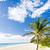 バルバドス · カリビアン · ツリー · 風景 · 海 · 手のひら - ストックフォト © phbcz