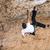 wspinaczki · strony · wspinaczki · rock · mężczyzna - zdjęcia stock © photobac