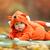 cute baby boy dressed in fox costume stock photo © photobac