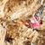 jovem · feminino · rocha · penhasco · cara · mulher - foto stock © photobac