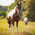 horse grazing in a meadow stock photo © photobac
