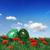 зеленый · яйца · Nice · украшение · Пасху · время - Сток-фото © photochecker