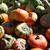 fresco · abóboras · bastante · diferente · venda · fruto - foto stock © photochecker