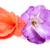 two colorful flower gladiolus isolated on white stock photo © photocrea