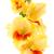 Geel · geïsoleerd · witte · schoonheid · najaar · kleur - stockfoto © Photocrea