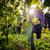 olgun · şarap · üzüm · sarmaşıklar · Toskana · bağ - stok fotoğraf © photocreo