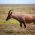 savan · serengeti · Afrika · safari · Tanzanya · doğa - stok fotoğraf © photocreo