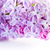 lezzet · çiçekler · makro · üst · pozisyon - stok fotoğraf © photocreo