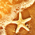 starfish on the exotic beach ocean waves at warm sunset stock photo © photocreo