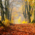 tarde · sol · cair · folhas · tarde - foto stock © photocreo