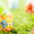 paaseieren · bloemen · gras · kleurrijk · lentebloemen · vers - stockfoto © photocreo