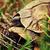 wild · luipaard · schildpad · Tanzania · afrika - stockfoto © photocreo
