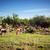 群れ · ボツワナ · サバンナ · 草 · 自然 · 光 - ストックフォト © photocreo