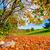 jesienią · parku · zielone · Hill · czerwony · pozostawia - zdjęcia stock © photocreo
