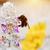 ape · fiore · raccolta · polline · cielo · fiori - foto d'archivio © photocreo