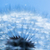 close up of dandelion blue sky spring background stock photo © photocreo