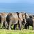 elefántok · Kenya · elefánt · nyáj · park · Afrika - stock fotó © photocreo