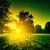 verde · vibrante · floresta · sol · brilhante · folhas - foto stock © photocreo