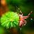 európai · kert · pók · kereszt · fajok · közelkép - stock fotó © photocreo