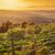 bağ · Toskana · İtalya · gökyüzü · bahar - stok fotoğraf © photocreo