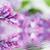 friss · virágcsokor · orgona · öreg · váza · fa · asztal - stock fotó © photocreo