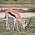 ahu · savan · Afrika · safari · serengeti · Tanzanya - stok fotoğraf © photocreo