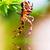 kert · pók · kereszt · áll · támadás · pozició - stock fotó © photocreo