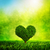 heart shaped tree growing on green grass love nature environment stock photo © photocreo