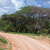 саванна · дороги · пыльный · игры · резерв · ЮАР - Сток-фото © photocreo