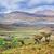 sabana · puesta · de · sol · África · árboles · parque · Sudáfrica - foto stock © photocreo