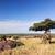 majmok · nyugat · Kenya · Afrika · bokor · park - stock fotó © photocreo