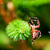 european garden spider called cross spider araneus diadematus species stock photo © photocreo