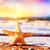 starfish on the beach at warm sunset travel vacation holidays stock photo © photocreo