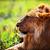 gier · buit · Tanzania · afrika · safari · serengeti - stockfoto © photocreo