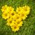バレンタイン · フローラル · 緑 · 中心 · 手 · 図面 - ストックフォト © photocreo