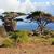 свет · Африка · Кения · дождь · зубов · лев - Сток-фото © photocreo