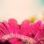 rosa · flor · primavera · laranja · planta - foto stock © photocreo