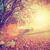 kleurrijk · bladeren · zonnestraal · ochtend · boom · bos - stockfoto © photocreo