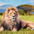 güneybatı · Afrika · aslan · yetişkin · erkek · esaret - stok fotoğraf © photocreo