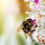 Hummel · Biene · Pollen · Blume · Sitzung · sonnig - stock foto © photocreo