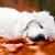 köpek · yavrusu · köpek · rottweiler · portre · bernese · dağ · köpeği - stok fotoğraf © photocreo