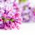flores · jardim · botânico · sakura · primavera · folha - foto stock © photocreo