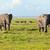 elefántok · nyáj · szavanna · szafari · Kenya · Afrika - stock fotó © photocreo